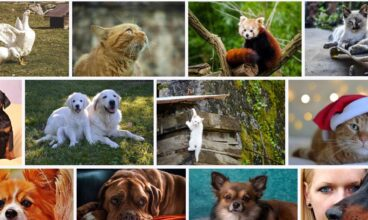 Animales de compañía para tener en casa