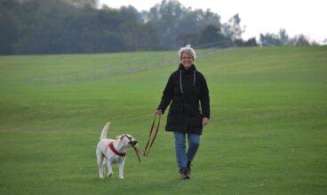 Precios 2021  ¿Cuánto cuesta un paseador de perros?