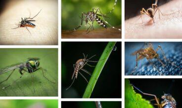 Muchas dudas hay si los mosquitos trasmiten  el coronavirus covid 19