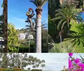 Jardineros Poda de Arboles y Palmeras Mallorca Jardines Stoyanoff