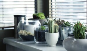 cuidar las plantas de interior en invierno